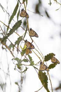Seven Monarchs_10_30_2015_AE4E5419
