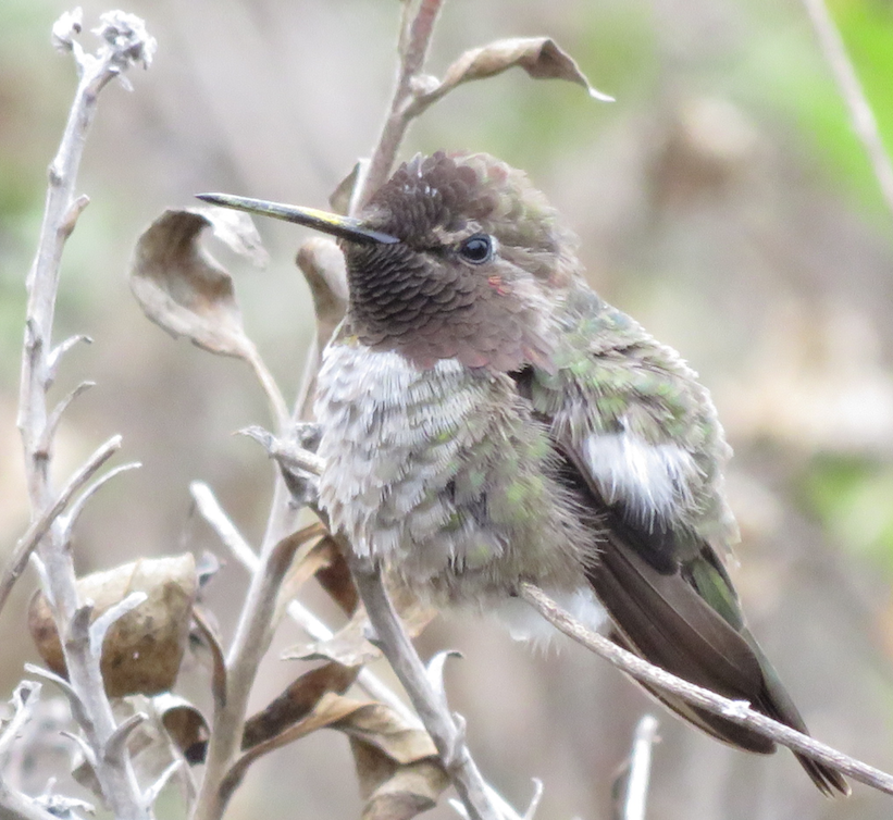A hummingbird pollinates wildflowers