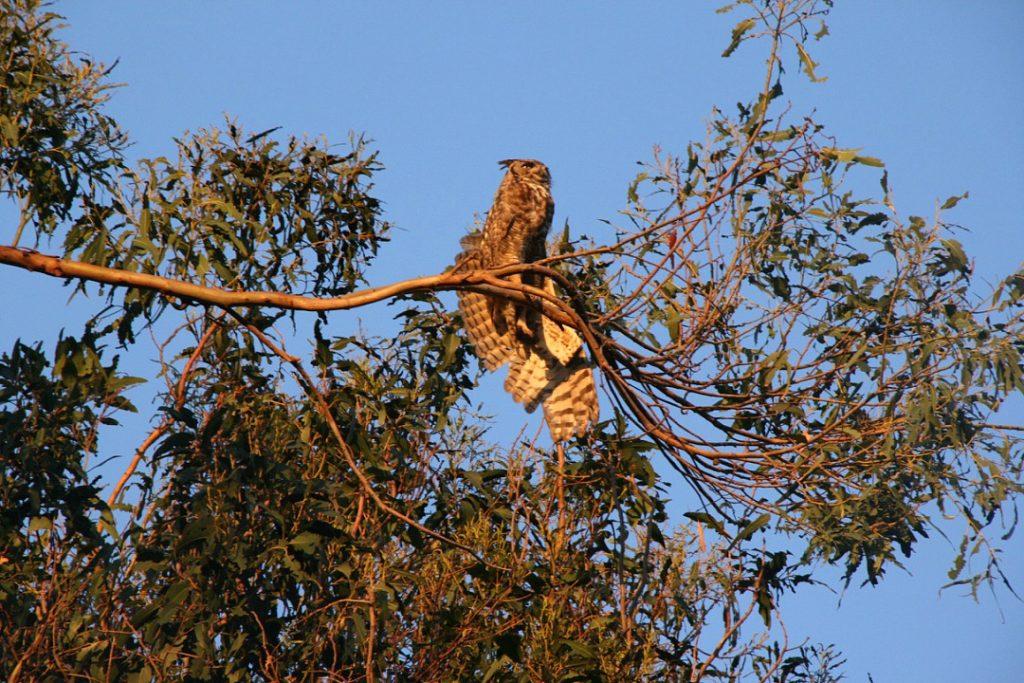 owl07043